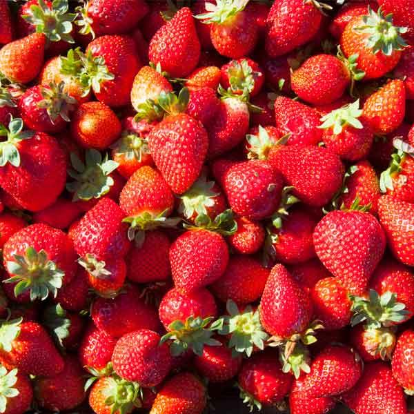 Fresas Palos de la Frontera