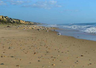 Gaviotas Playa Mazagón